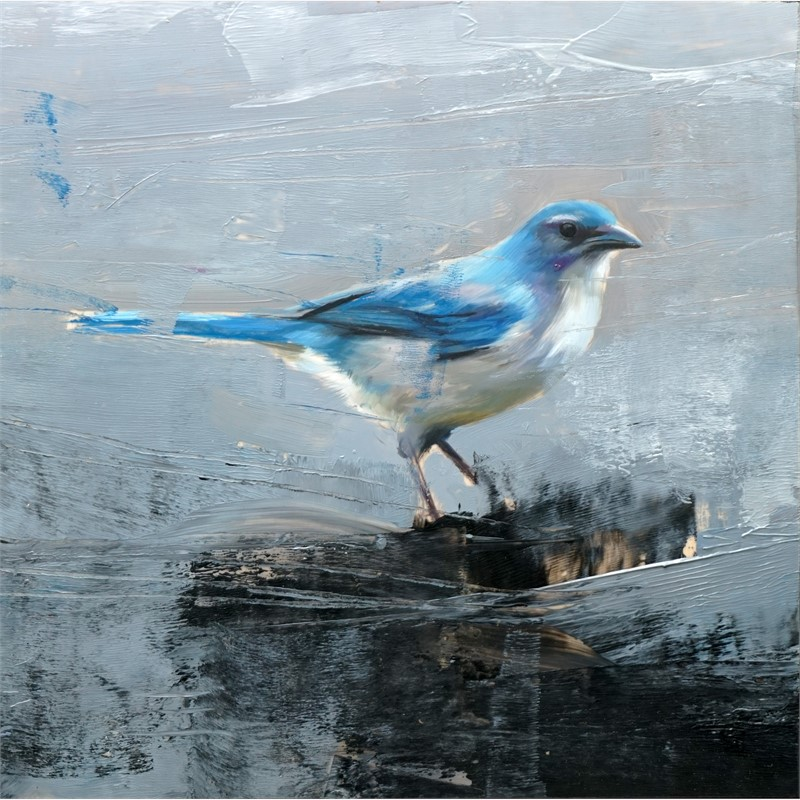 Studio Note with Scrub Jay