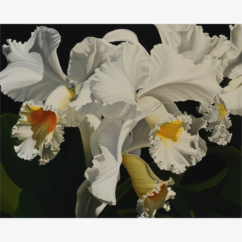 White Cattleya  Orchids (TBD/50)