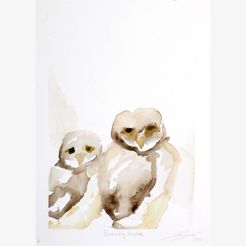Burrowing Owlets, 2018
