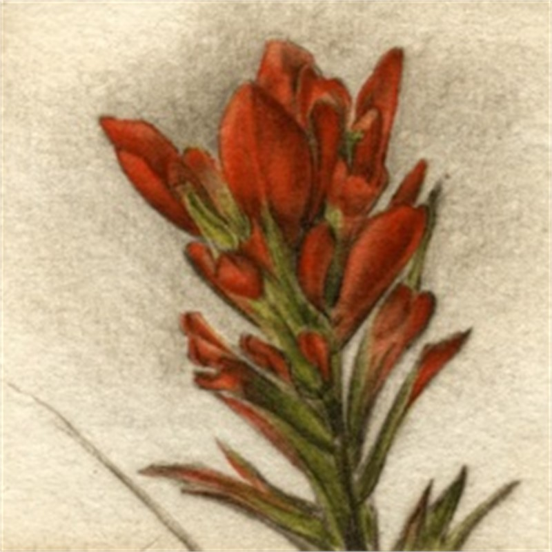 Paintbrush_UF (110/150)