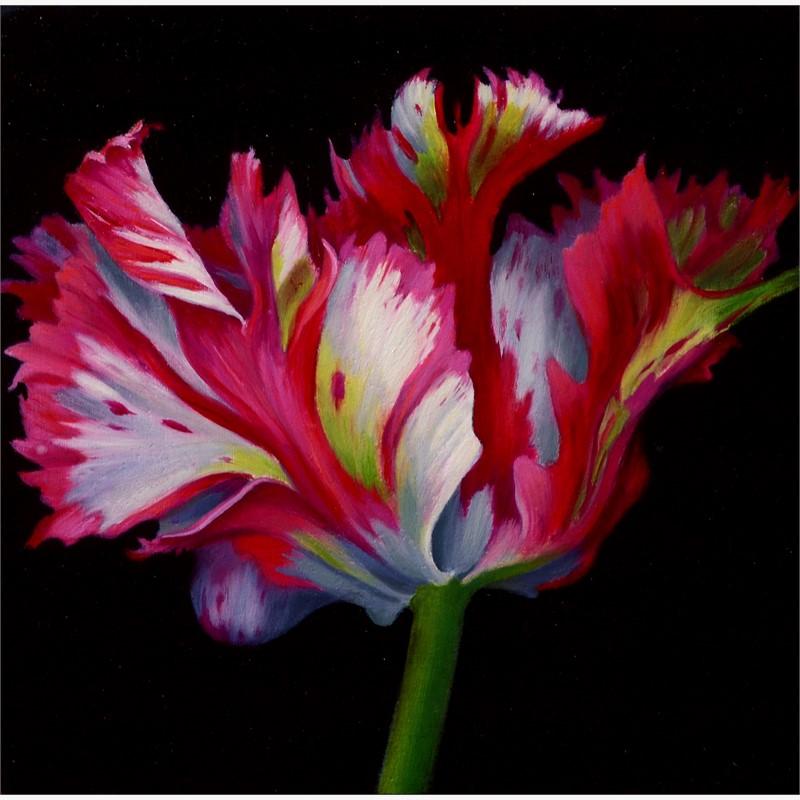 Pink Parrot Tulip, 2018