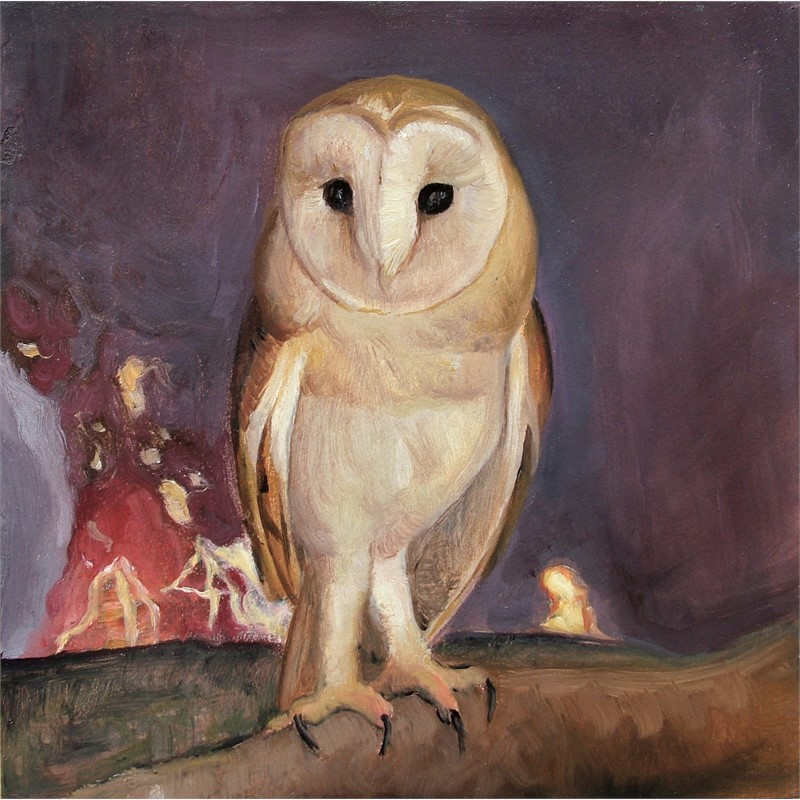 Barn Owl by David Molesky