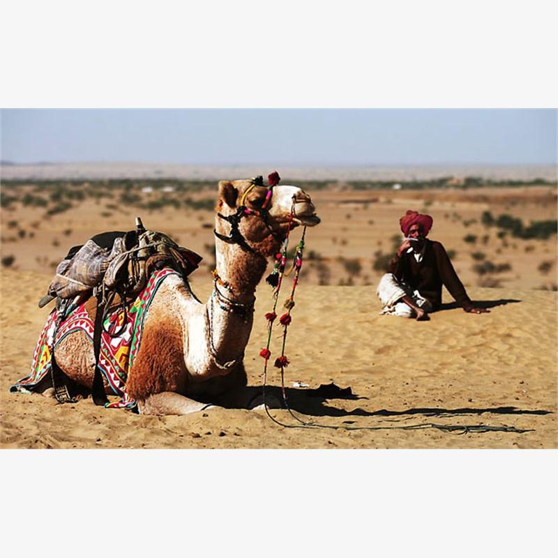 Thar Desert, 2007