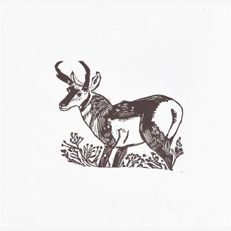 Pronghorn Antelope, 2019