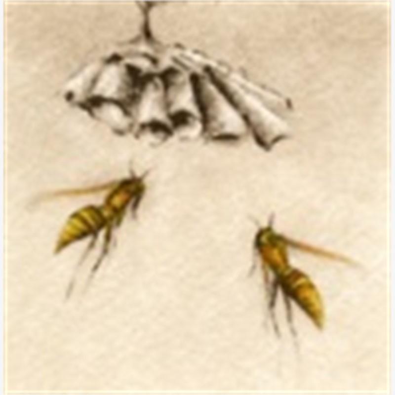 Paper Wasps_UF (15/100)