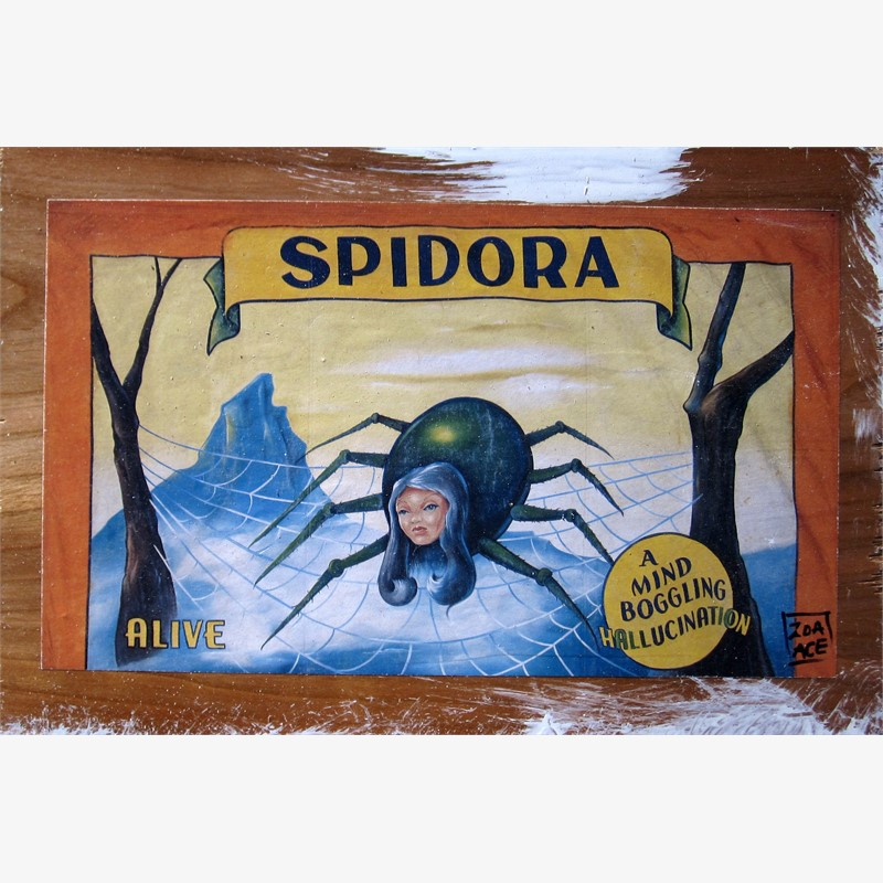 Spidora