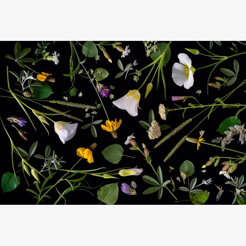 Wildflowers (2/20)