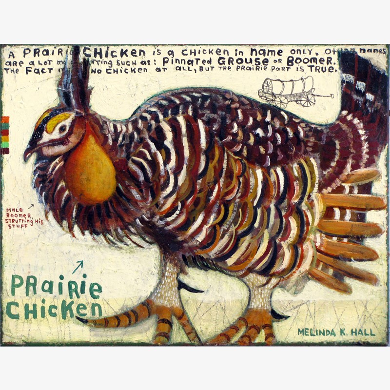Prairie Chicken: Boomer, 2018