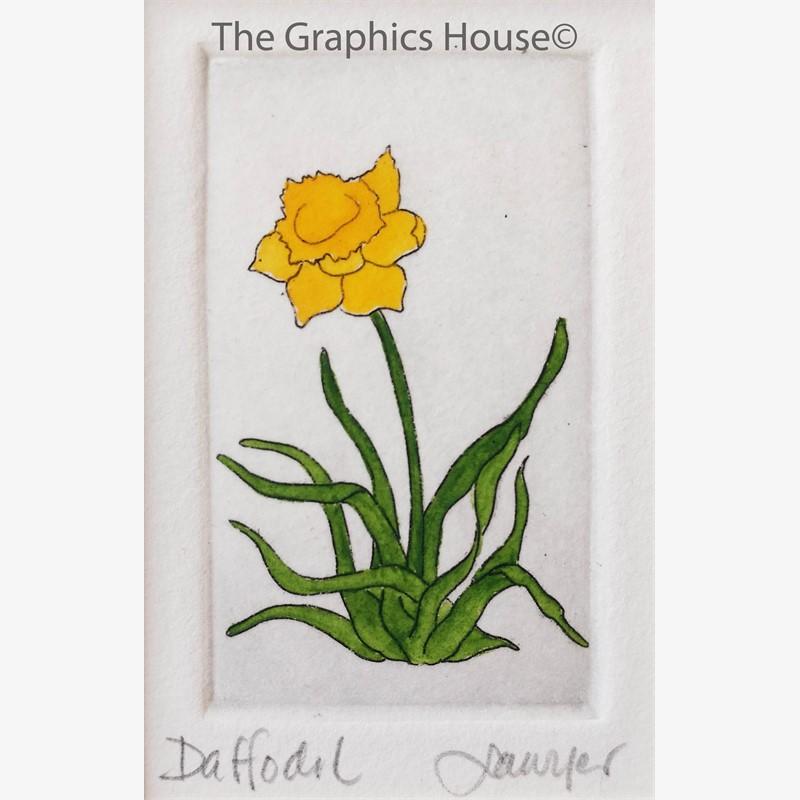 Daffodil_UF