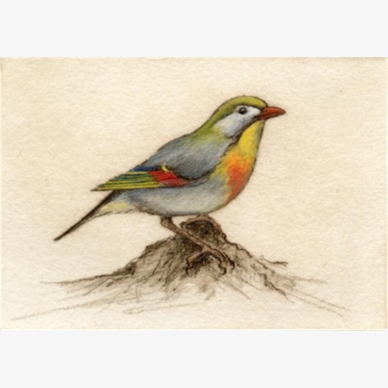 Chinese Nightingale_UF (31/100)