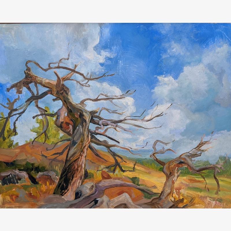 Caitlin's Tree
