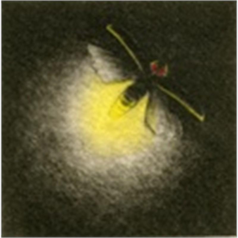 Firefly_UF (66/100)