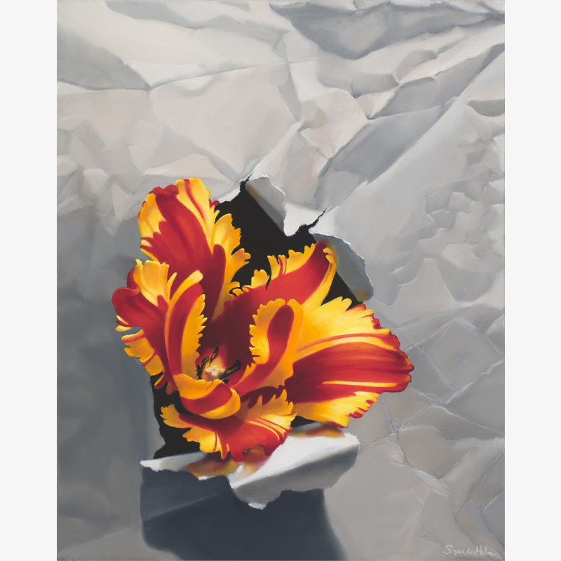 Tulip Bursting Through White Paper