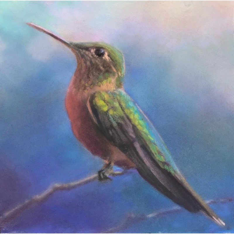Hummingbird commission 1