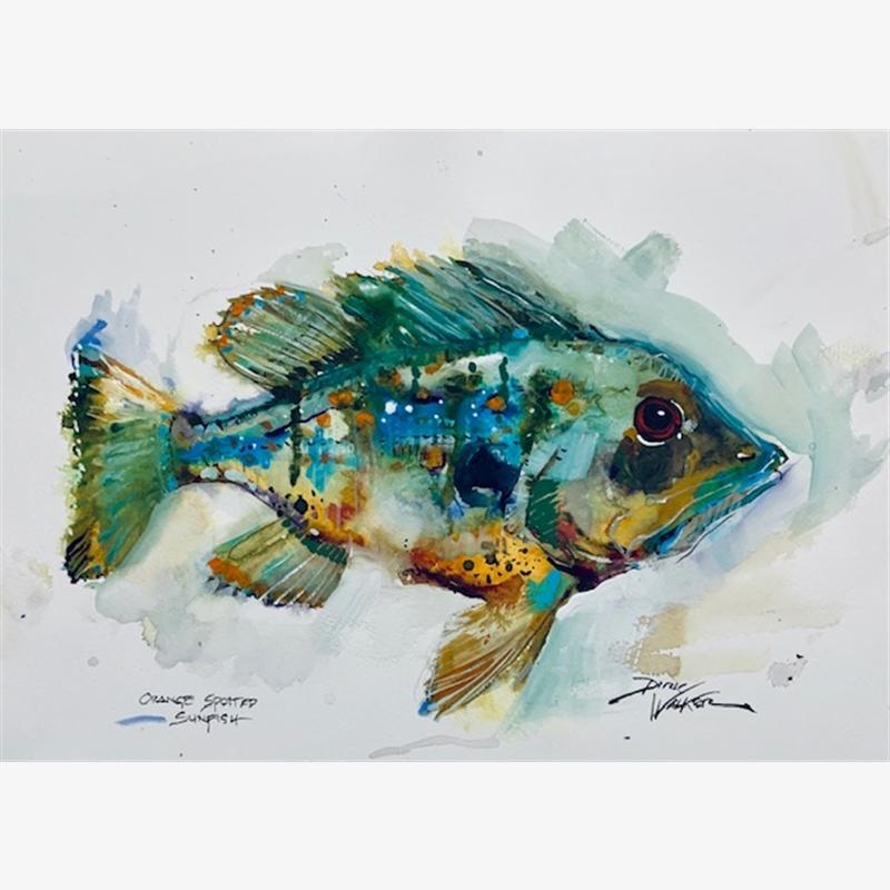 Orange Spotted Sunfish, 2019