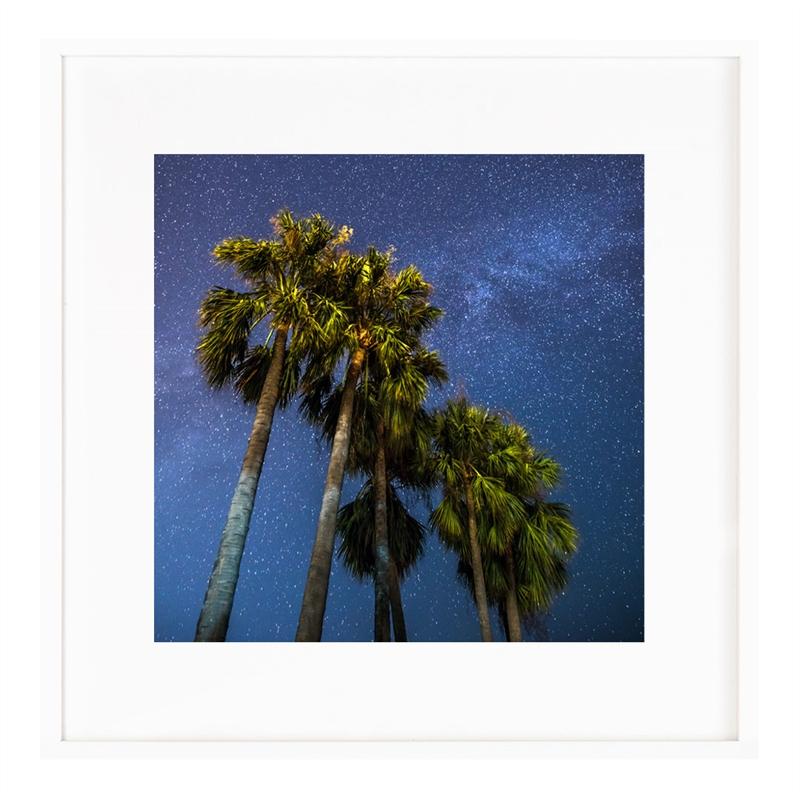 Palms (1/25), 2015