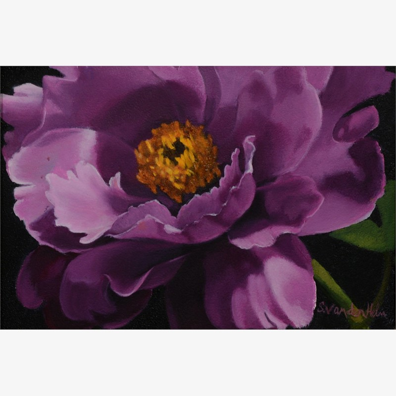 Purple Peony in Sunlight, 2019