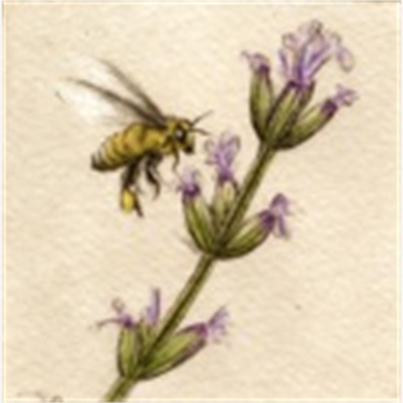 Honey Bee_UF (62/100)