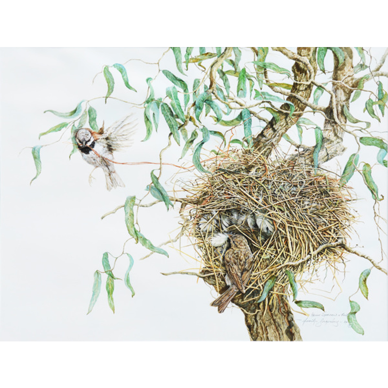 Sparrows and Nest