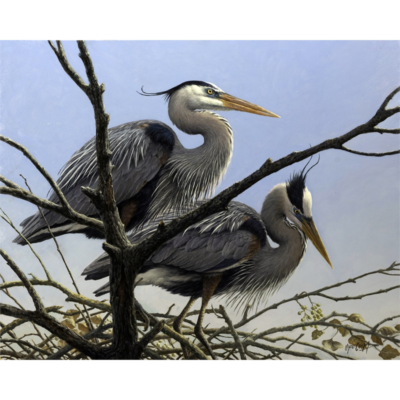 Garzas Azules en el Nidal Blue Heron Rookery