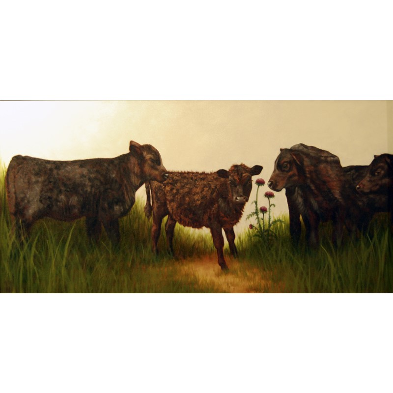 Calves with Runt and Thistle