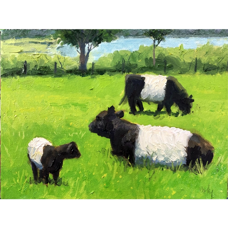 Belted Galloway and Calf