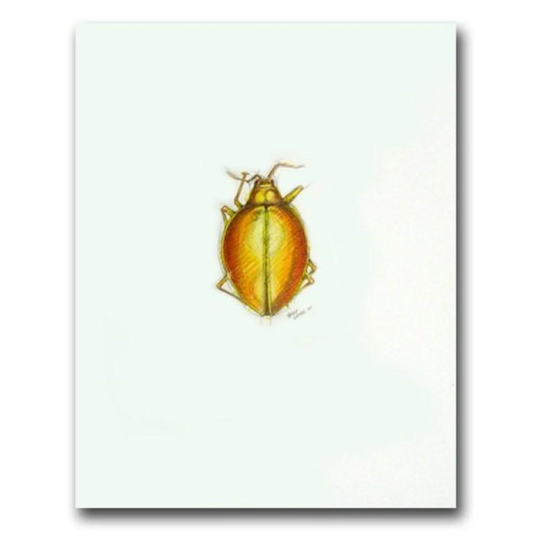 Fungus Beetle