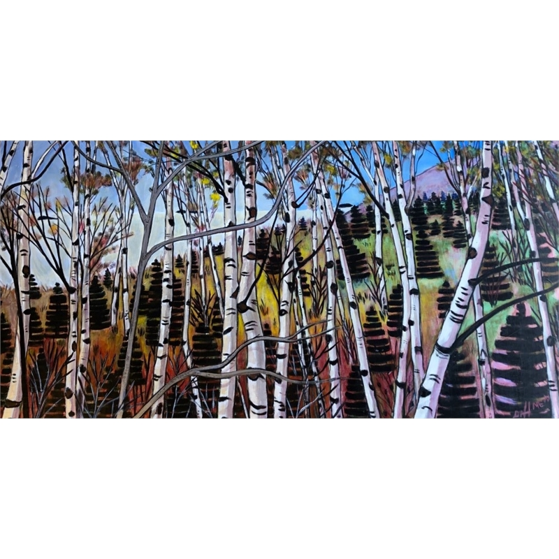 Evergreens and Birches Along the Coast