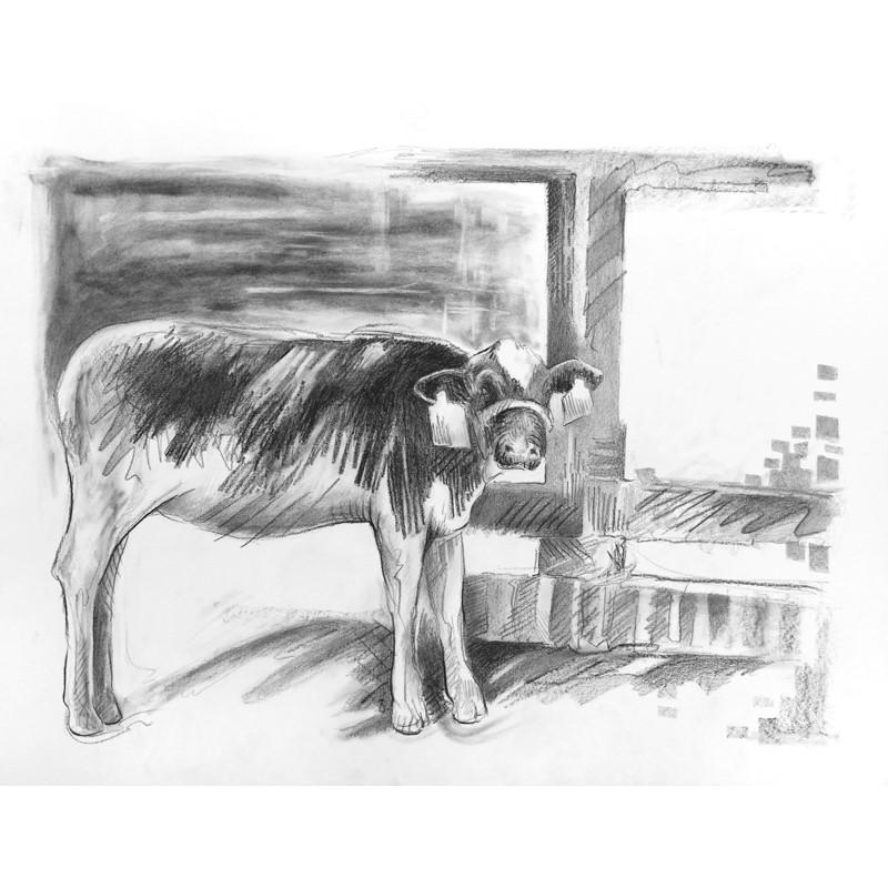 No. 7 Cow