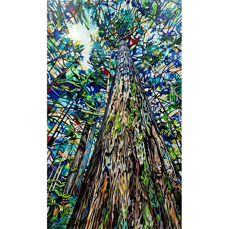 Tall Cedar, 2019