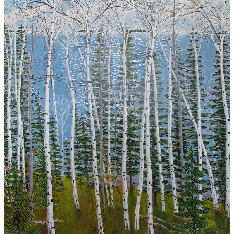 Spring Birches & Evergreens