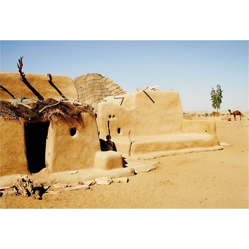Desert Life, 2007