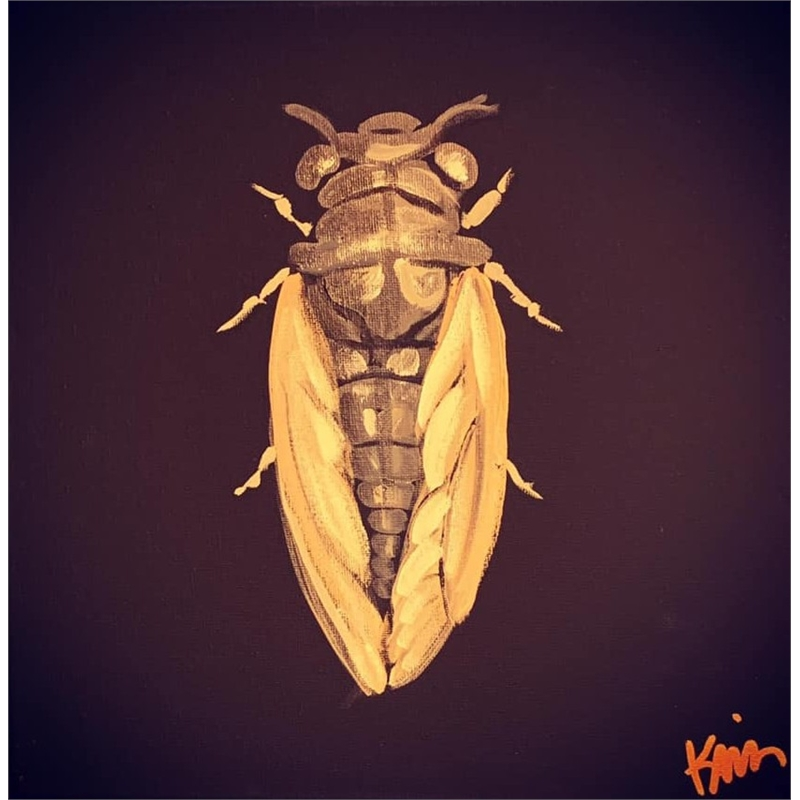 Cicada, 2019