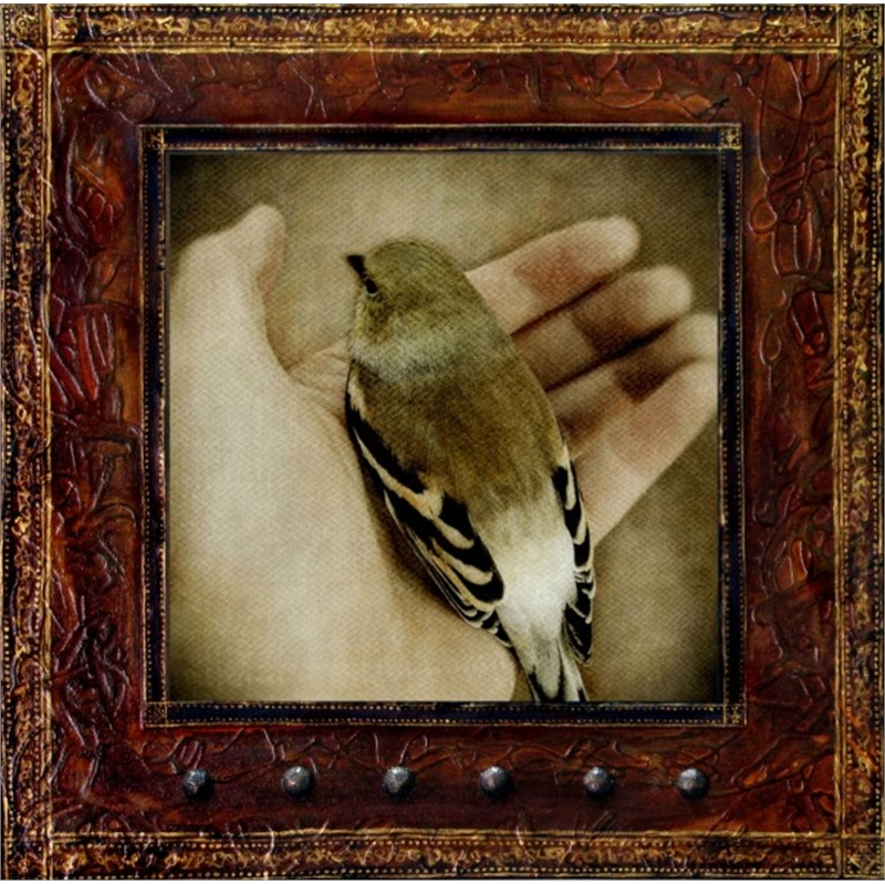 In My Hand - American Goldfinch, 2013
