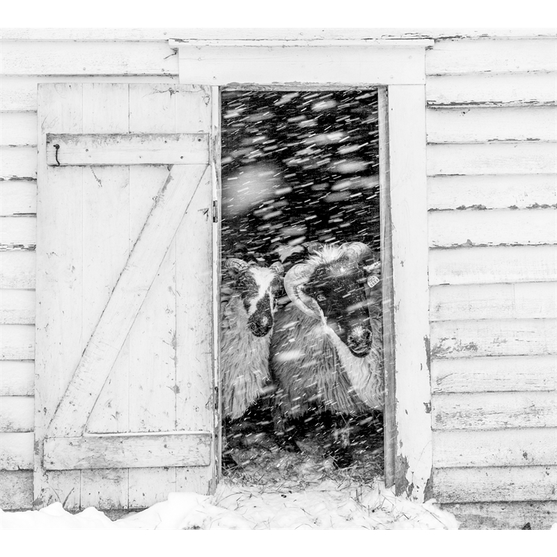 Snow Storm (2/5)
