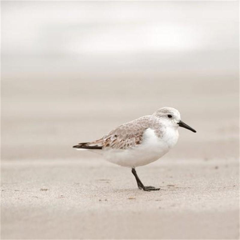 Sandpiper I