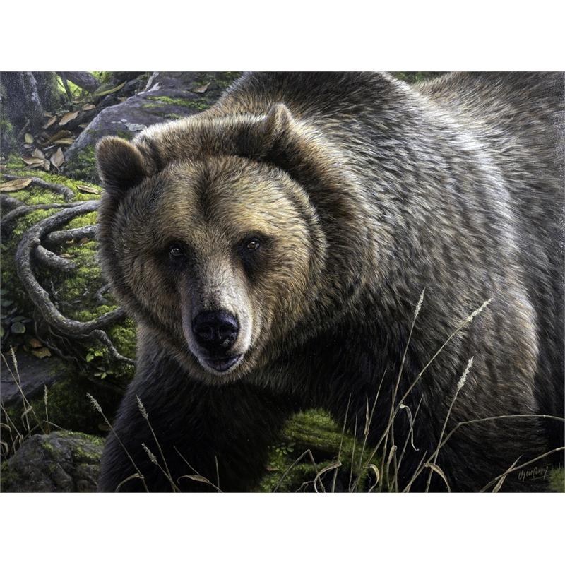 Grizzly en su Dominio Grizzly's Domain