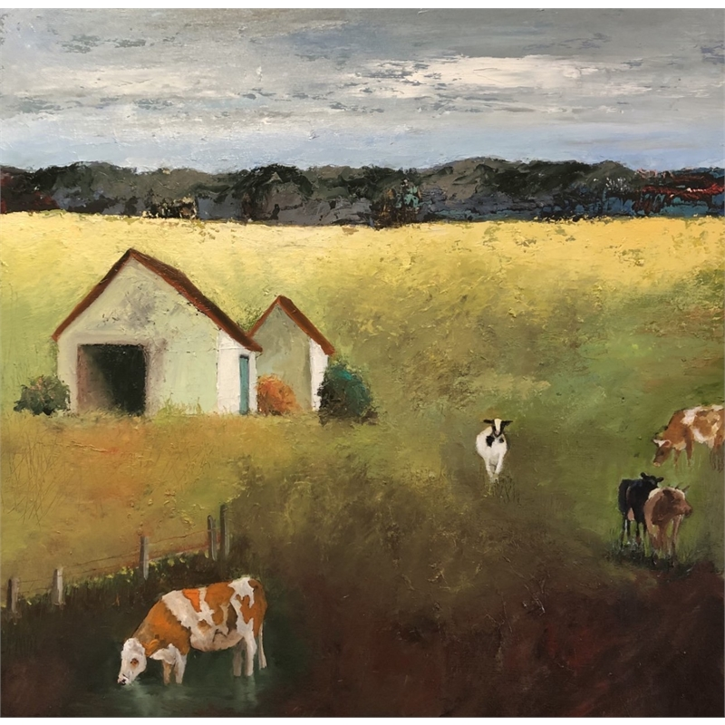 County Cows