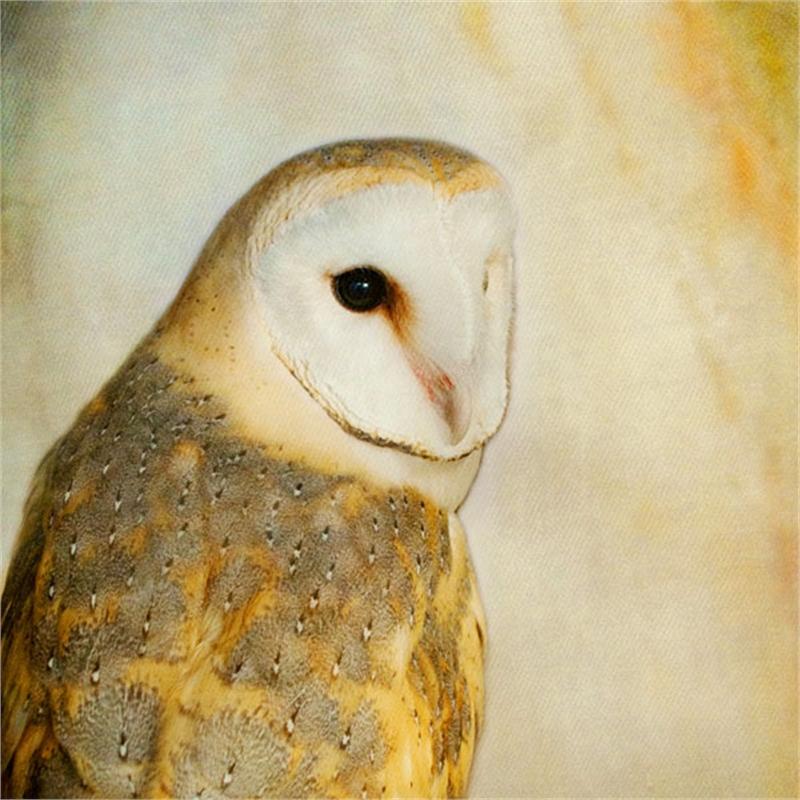 Song of a Barn Owl II, 2018