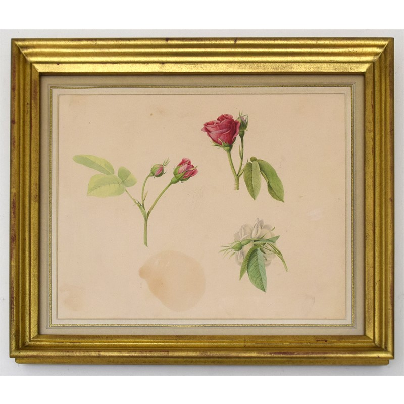 BOTANICAL STUDY, French/Belgian, circa 1800