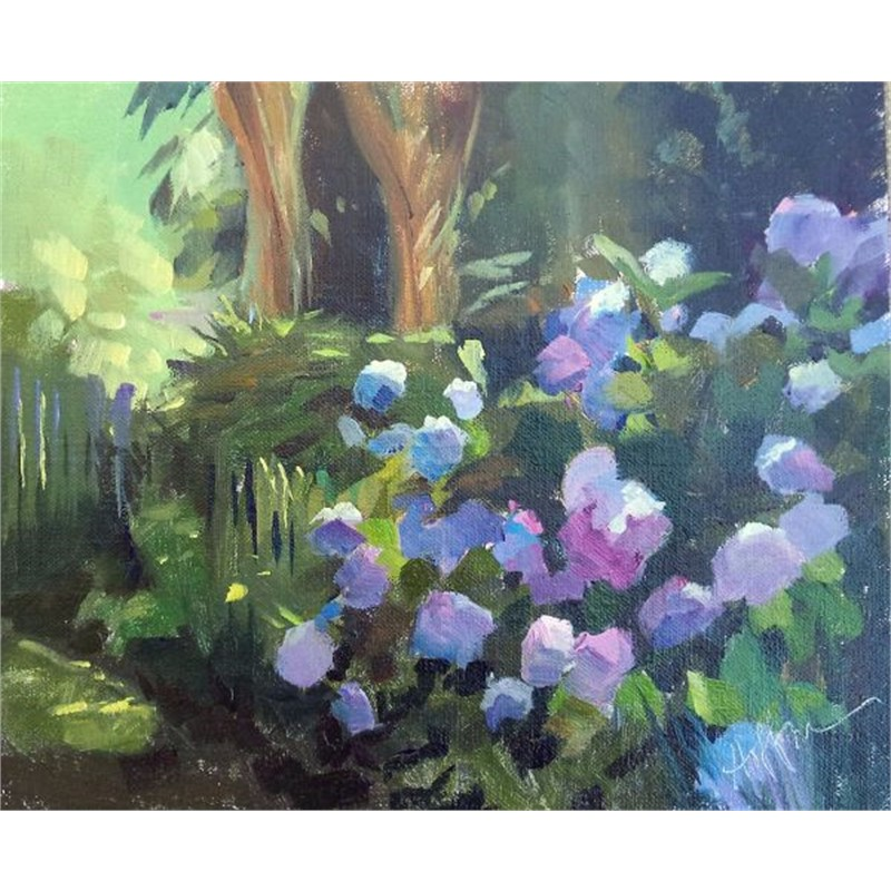 Shaded Hydrangeas