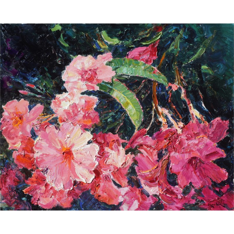 Oleander by Alan Wolton