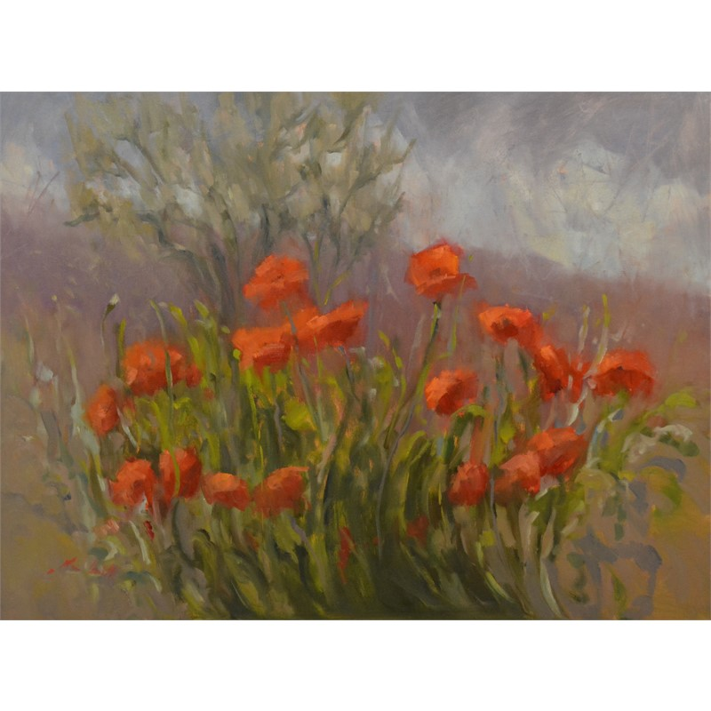 Wild Poppies of Umbria