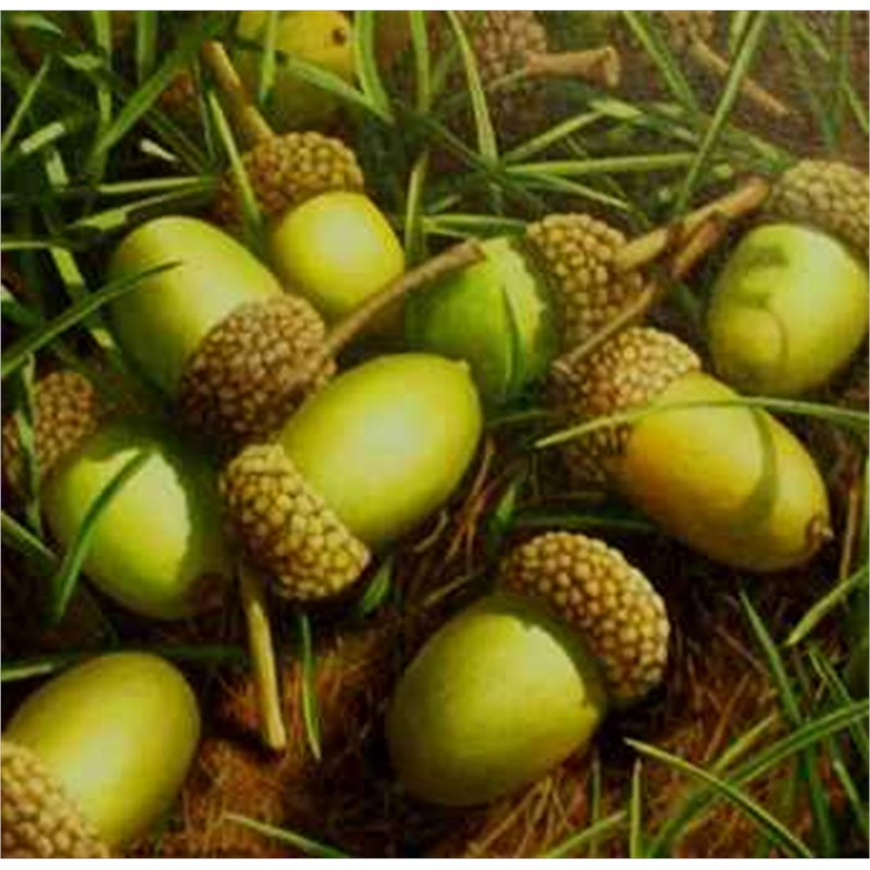 Acorns and Grass