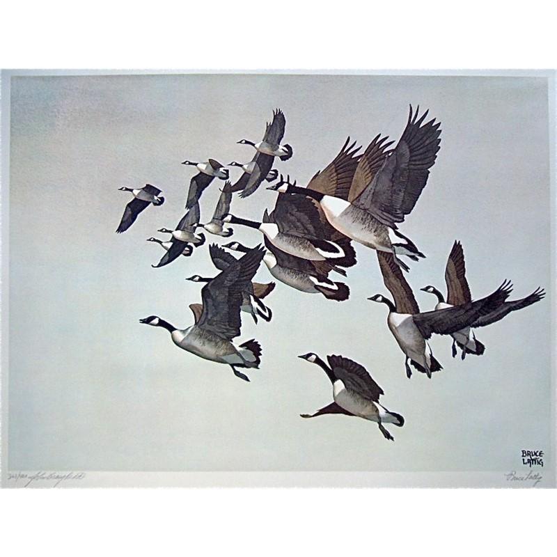 WILD BIRDS OF NORTH AMERICA SERIES (/400)
