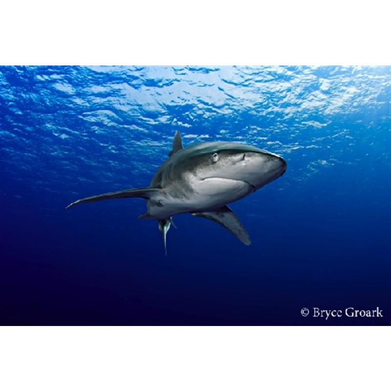 Oceanic by Bryce Groark