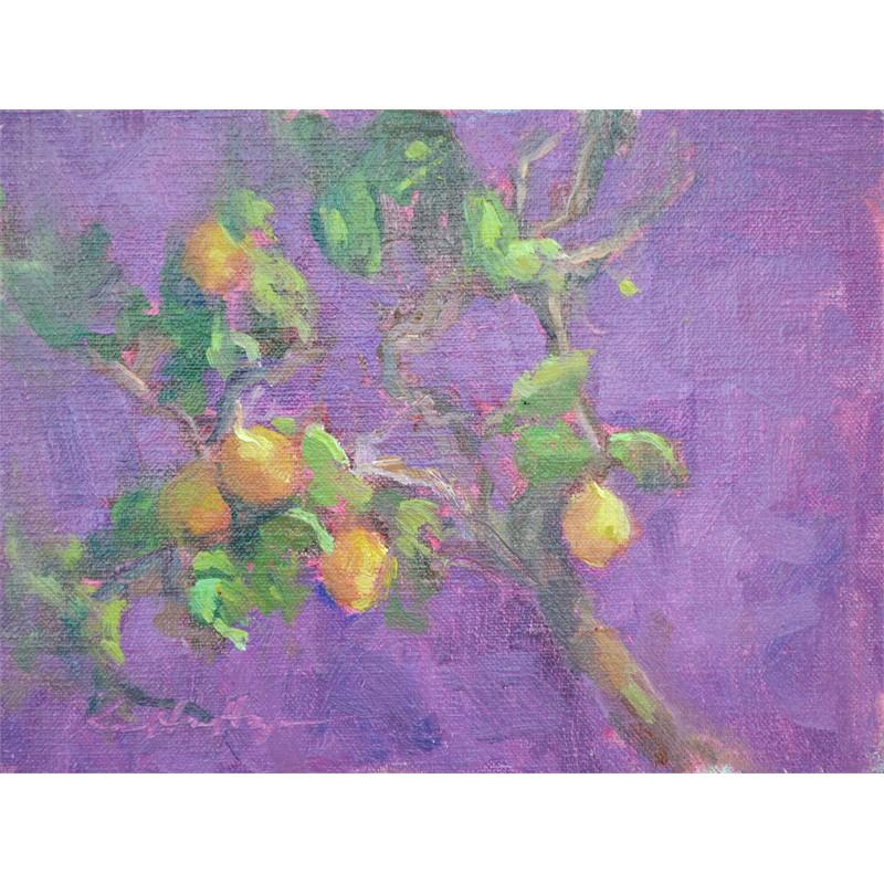 Lemon Trees at La Consuma