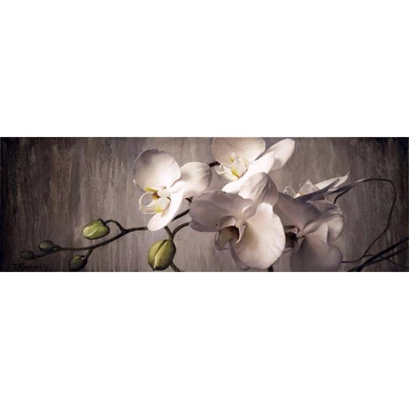 Orchids (0/95)