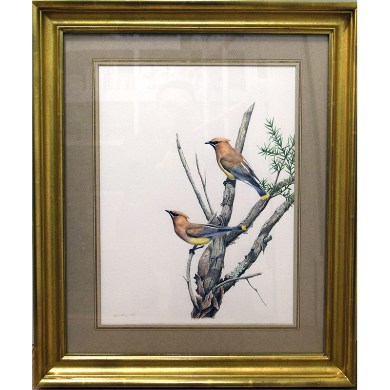 TWO CEDAR WAXWINGS BY TONY HENNEBERG, 2011