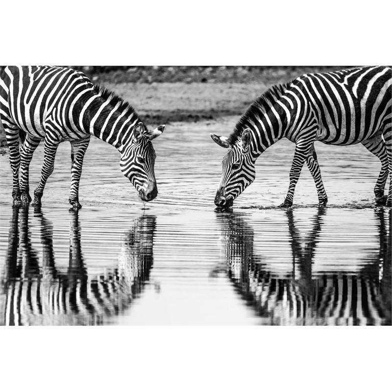 Wildlife #24, 2019